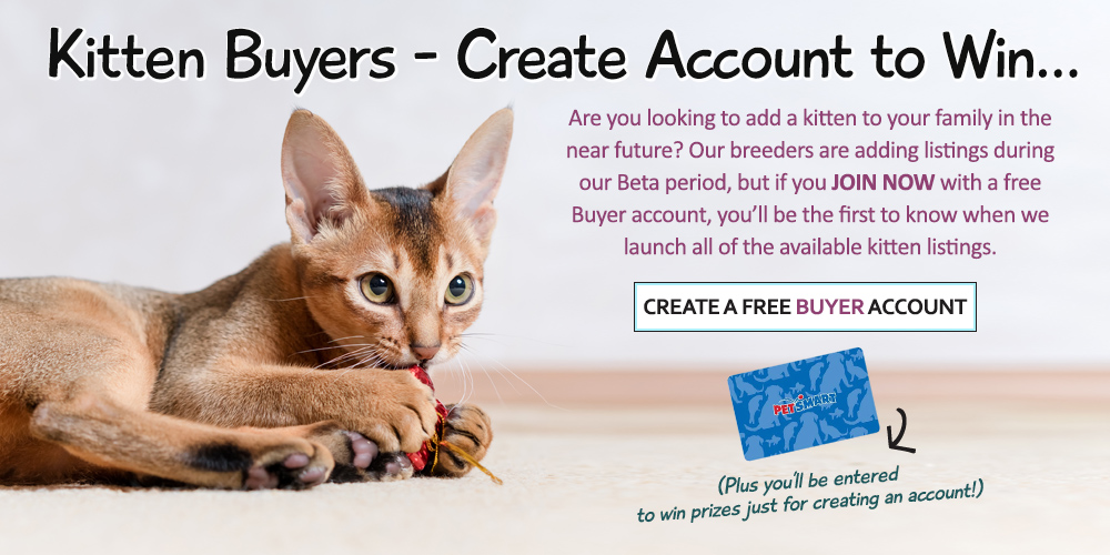 Create a free Buyer account to shop for kittens